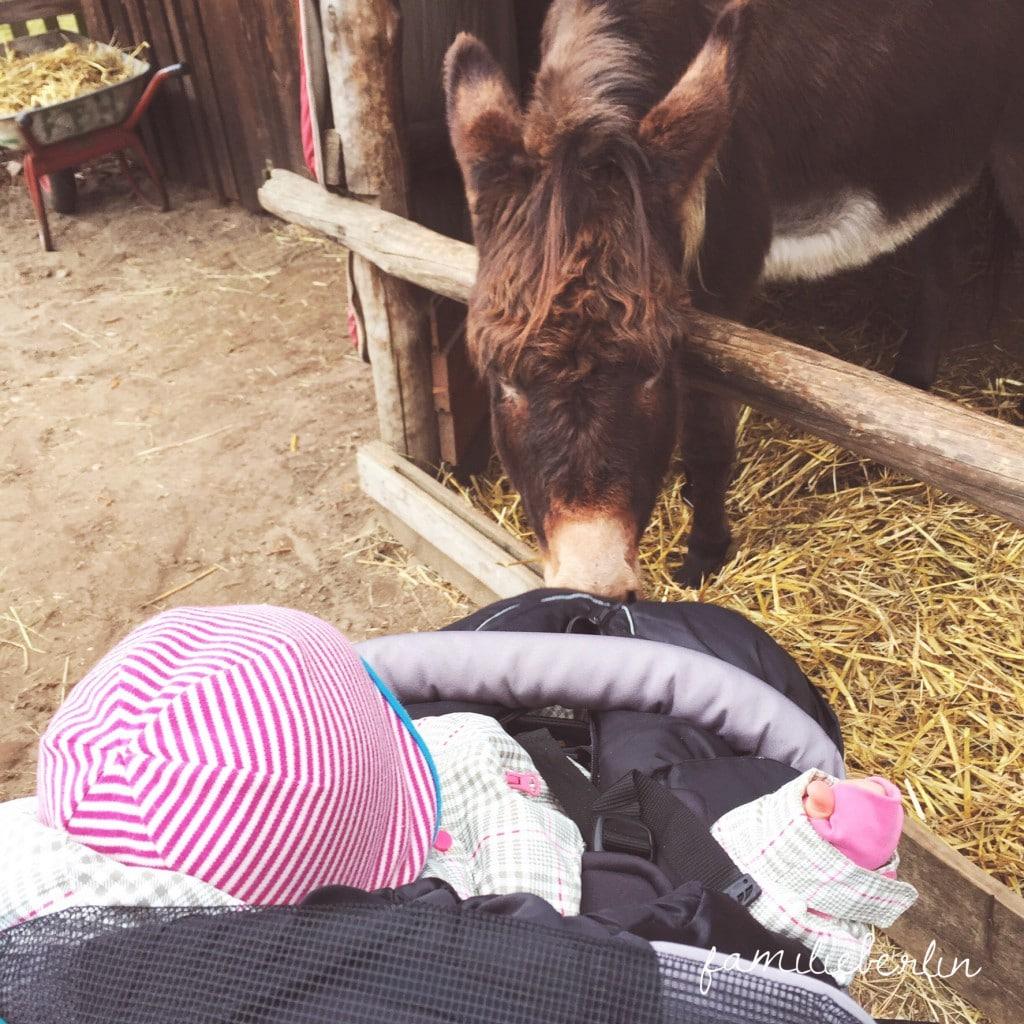 Esel, Bauernhof, Berlin, Pankow, Ausflug