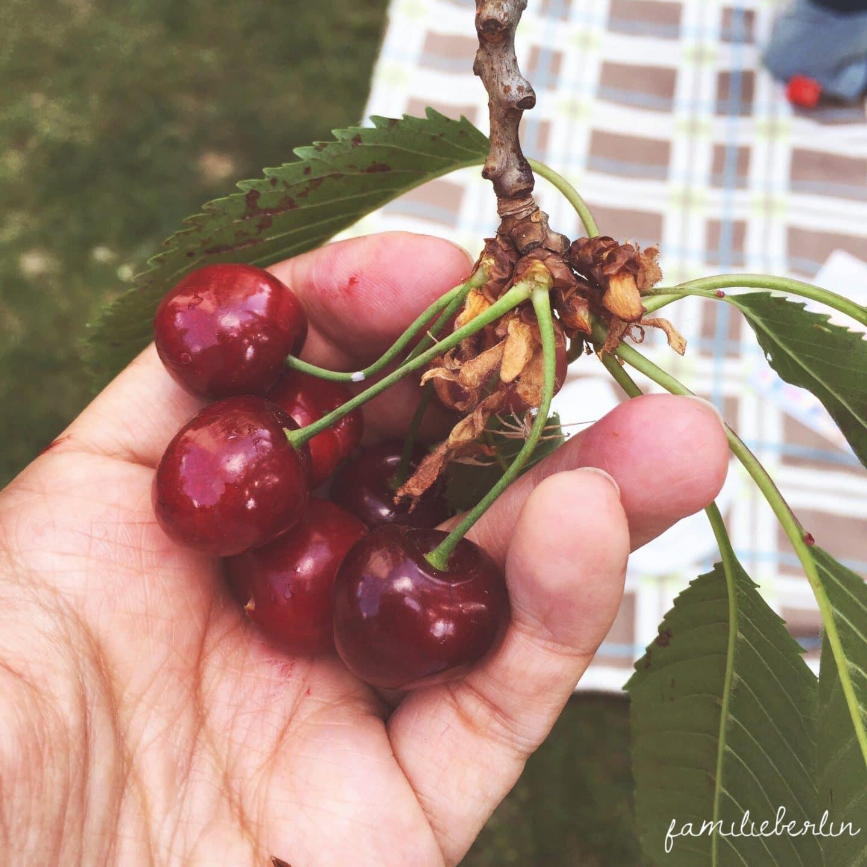 Sommer, Erinnerungen, 12 von 12, 12v12, draußen nur Kännchen, Juni, 2015