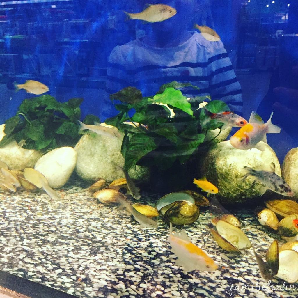 Kleinkind_Aquarium_Kleintiere_Zoo